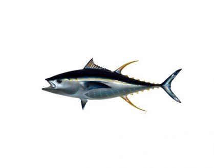 慎选鱼类减少摄取汞