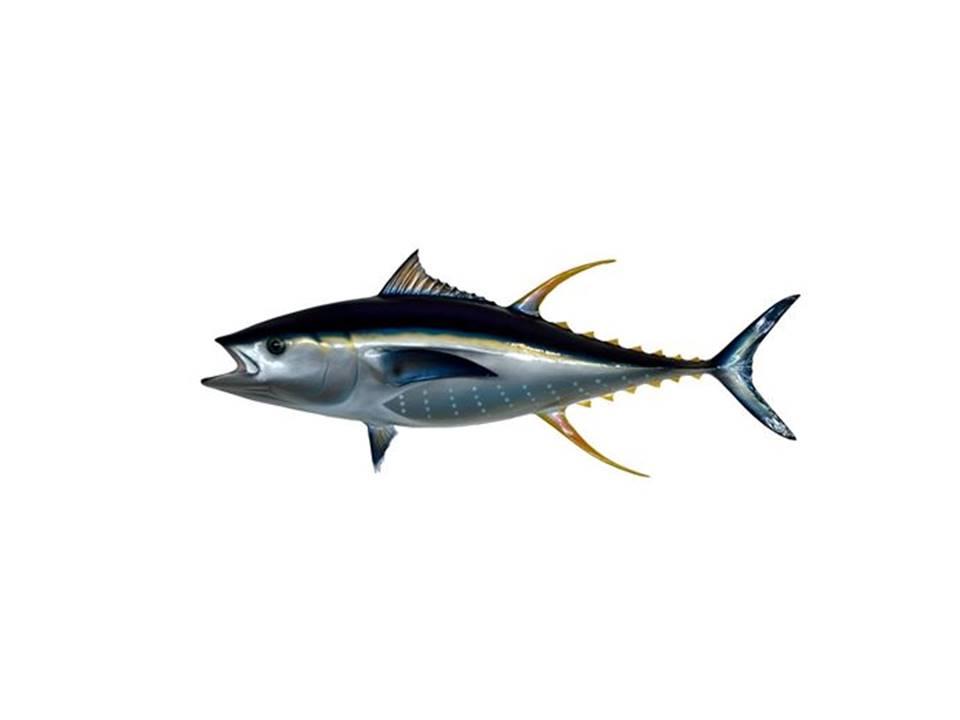 慎選魚類減少攝取汞