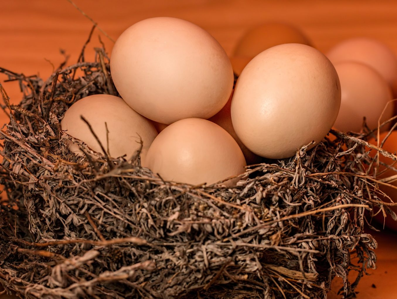 蛋,是友是敵?