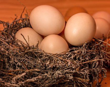蛋,是友是敌?